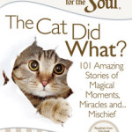 chicken-soup-for-the-soul-the-cat-did-what-9781611599367_lg